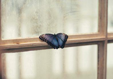 Kiedy ze związku odfruwają motylki
